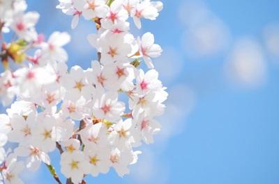 お花見ぐらいしたい