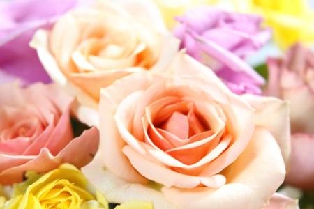 薔薇お祝い