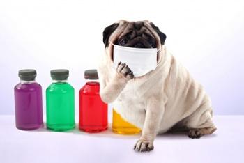 マスク 効果 インフルエンザ