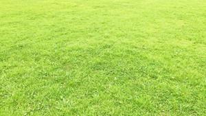 隣の芝生は青すぎる